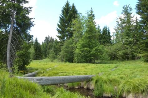Im Nationalpark erwartet uns schöne Natur, die wir beim Wandern erkunden können.