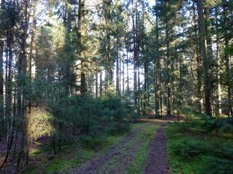 Wege im Kotgrubenholz.