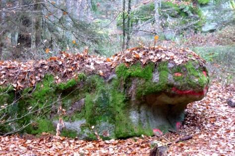 Seltsame Tiere treiben sich im Wald beim Wackelstein rum.