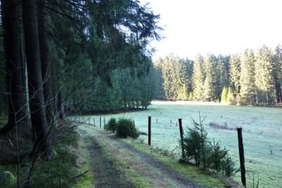 Nach Reisachmühle wandert man wieder einmal am Waldrand entlang.