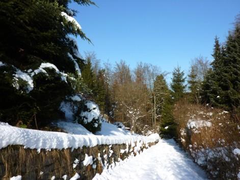 Waldweg bei Saldenburg.