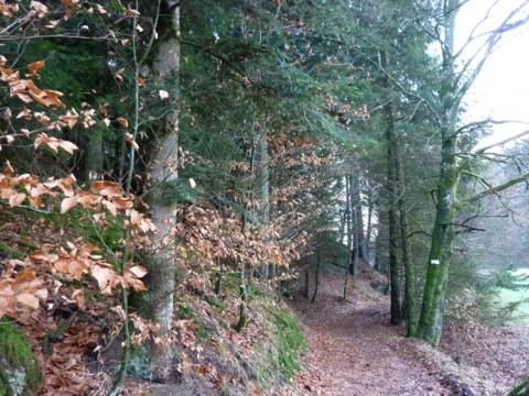 Waldweg.