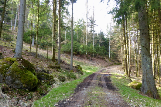 Waldwege im Lallinger Winkel.
