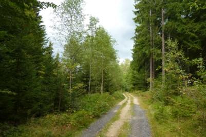 Wandern im Wald bei Frauenau auf schönsten Wanderwegen