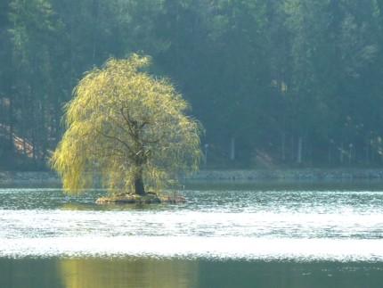 Eine einsame Insel?