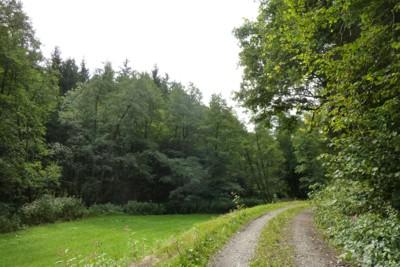 Einsame Wanderung im Bayerischen Wald.