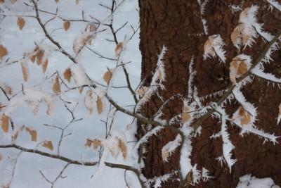 Winter-Kontraste