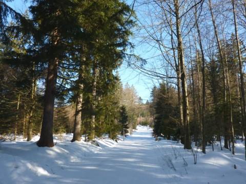Winterwanderweg bei Bodenmais Richtung Kleiner Arber.