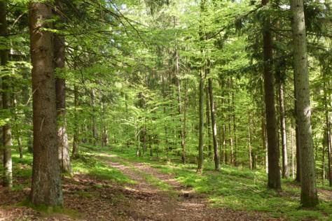 Wunderschöner Wanderweg des IVV am Ochsenstiegl.