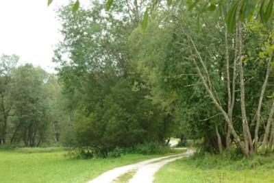 Ein schöner Wanderweg im Bayerischen Wald.