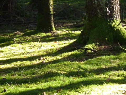 Teils geht es durch Fichtenwald, teils durch Mischwald.