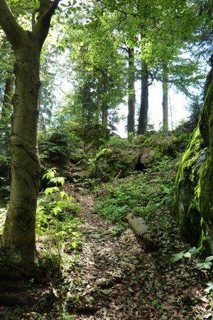 Der Wander-Pfad zwischen den Felsen beim Abstieg vom Hennenkobel.