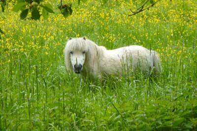 Hohe Gräser oder winziges Pony? Das ist hier die Frage!